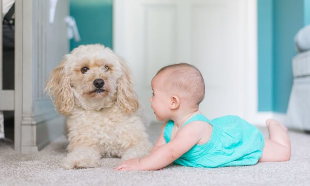 INTRODUCING A PET TO A NEW BABY